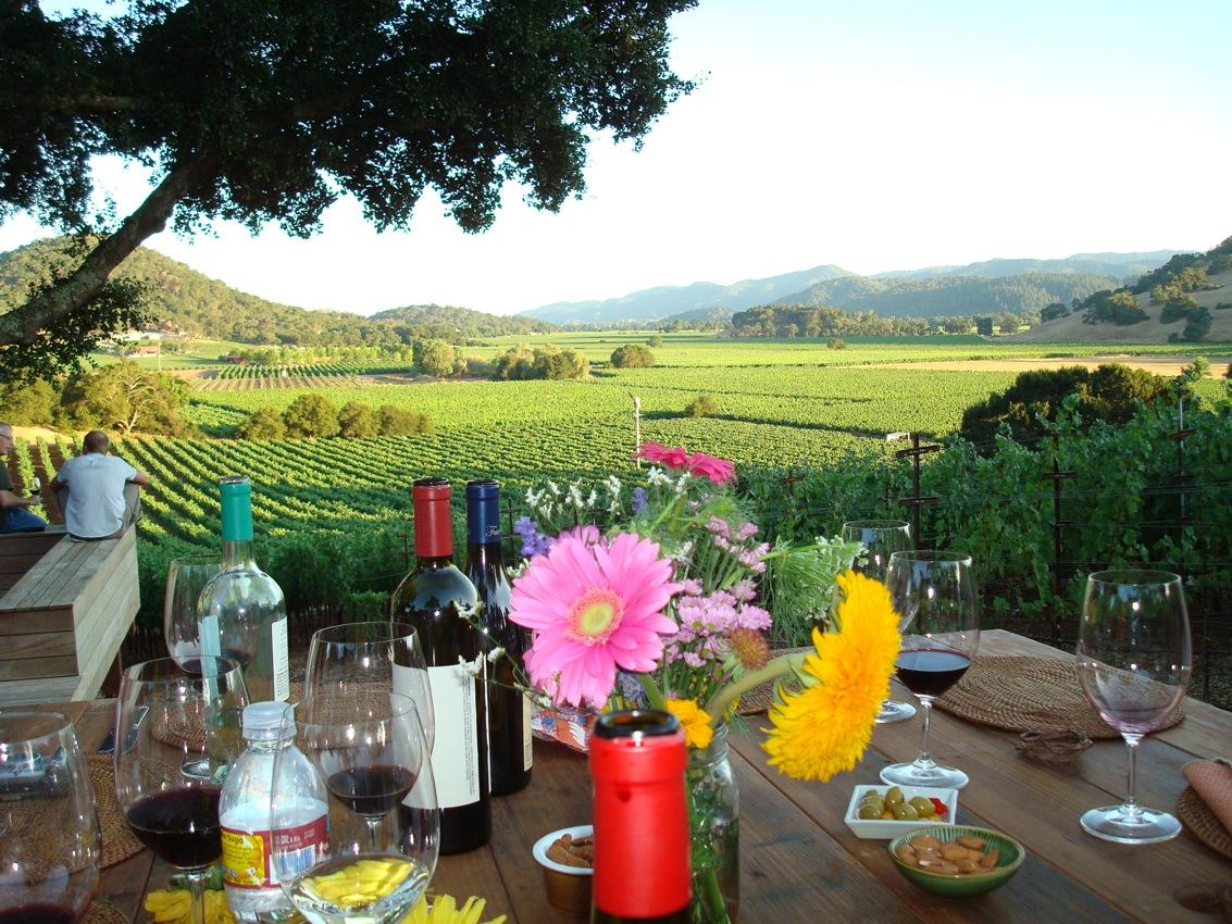 View of Napa vineyards