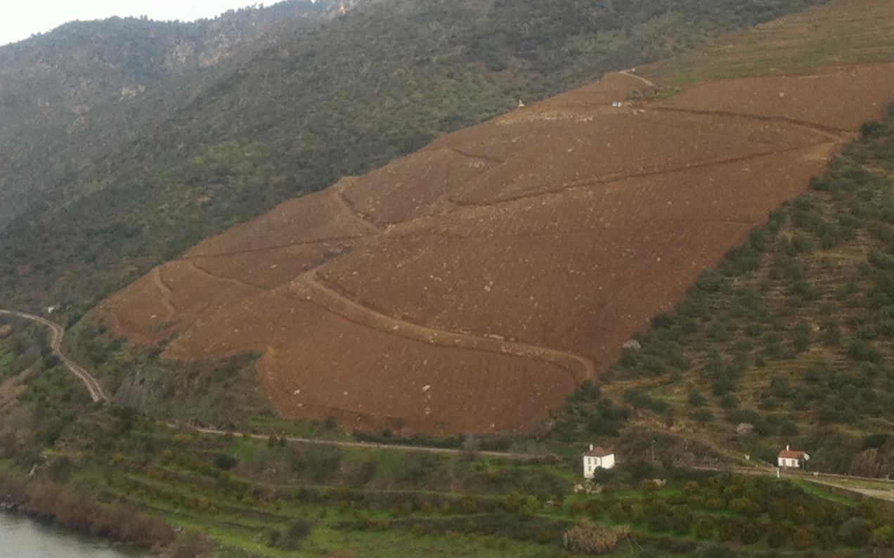 Quinta da Alegria – how to prepare the soil to plant vines